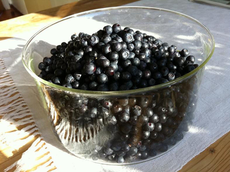 Årets första fångst av blåbär, plockade vid ickorbotten i Ludvika den 11 juli. Var det inte ovanligt tidigt??? Det känns så.