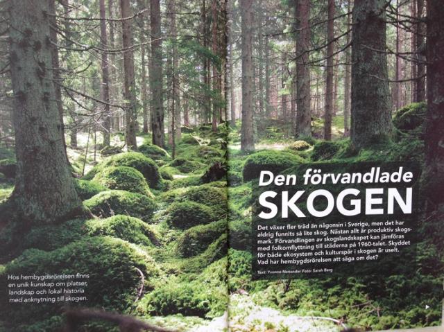Bygd o Natur skogsbild